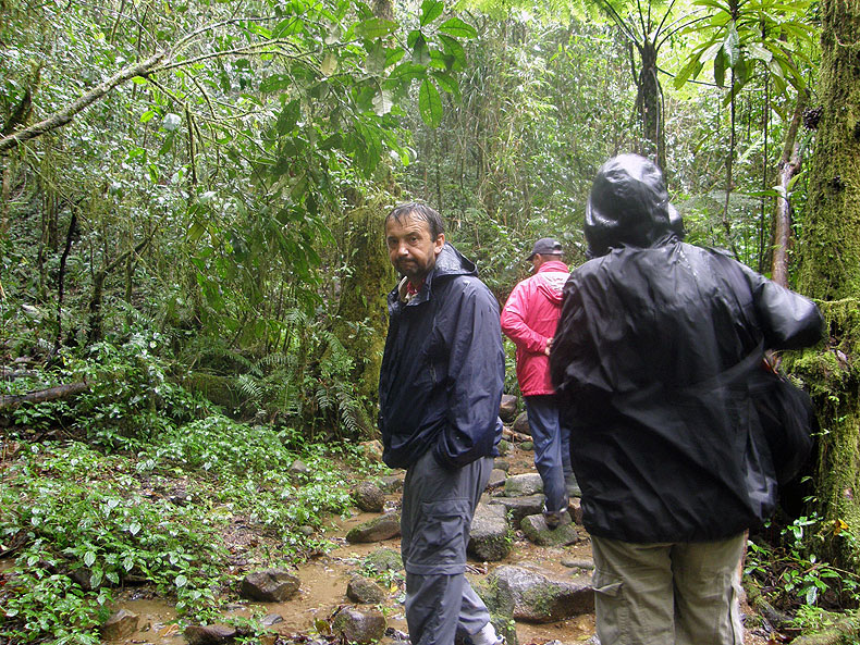 Dimo in the rainforest of Perinét