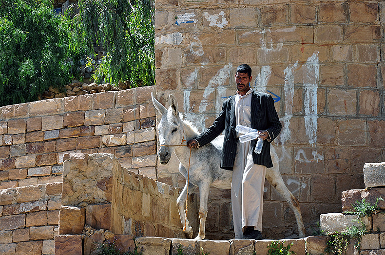 A donkey on a street of Shibam