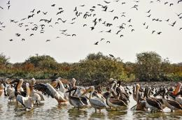 Djoudj Bird Sanctuary